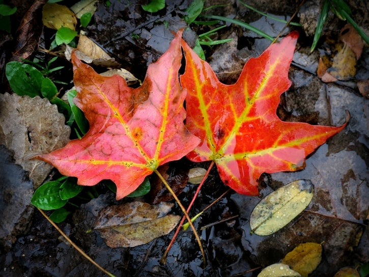 Fall Foliage Map 2019 When The Leaves Are Best In Wisconsin Local News I Racine County Eye Racine Wisconsin
