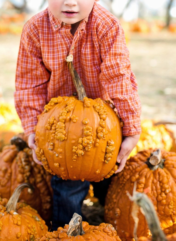 Pumpkin Farm Racine County