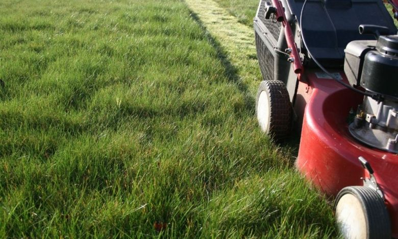 Tips and Tricks for Improving Your Lawn
