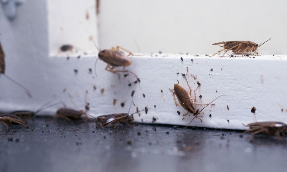 How To Keep Destructive Pests Out of Your Home