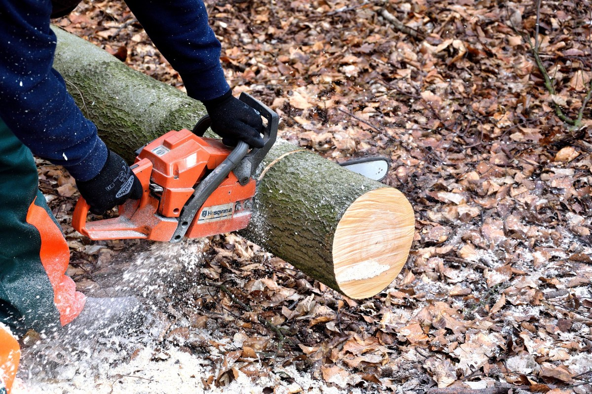 Chainsaw Craving