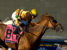 Wise Dan Looks for Back to Back Horse of the Year Titles
