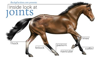 Equine Anatomy – Part 1/10 – Horses vs Humans – Racing Factions