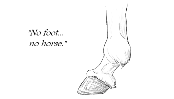 Equine Anatomy – Part 2/10 – Joints – Racing Factions