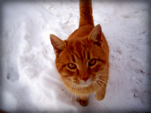 Tesla's cat in snow.
