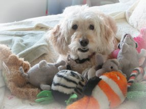 Gidget with toys, 2014.