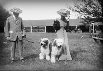 Victorian couple with Sheep Dogs.