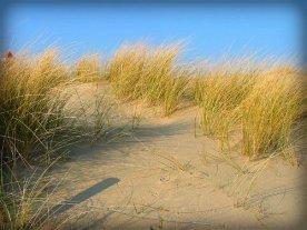 Grass on Dunes.