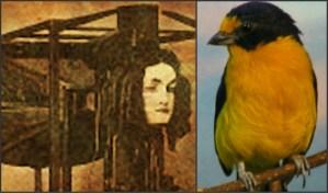 Euphonia Talking Machine: Euphonia Bird.