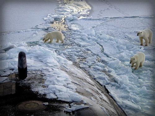 Polar Bears, North Pole, USS Honolulu. Image: Chief Yeoman Alphonso Braggs, US-Navy.