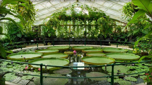 Giant Victoria Water Lily Pond at Kew Gardens. Image: Kew Gardens.