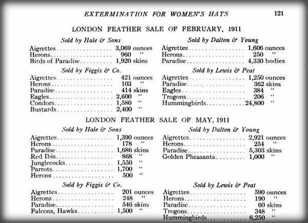 Page listing hunted birds from Our Vanishing Wildlife 1913 by William Temple Hornaday,