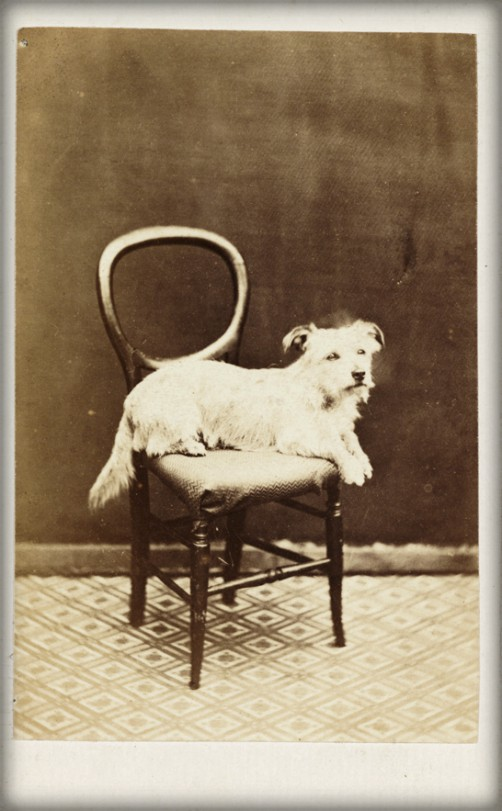 Dog on Chair, c, 1865. Image: scienceandmediamuseum.org.uk.