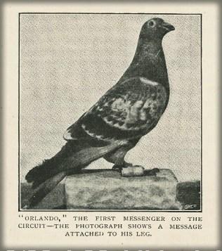 Catalina Pigeon, Orlando, c. 1890s. Image: Islapedia.com.