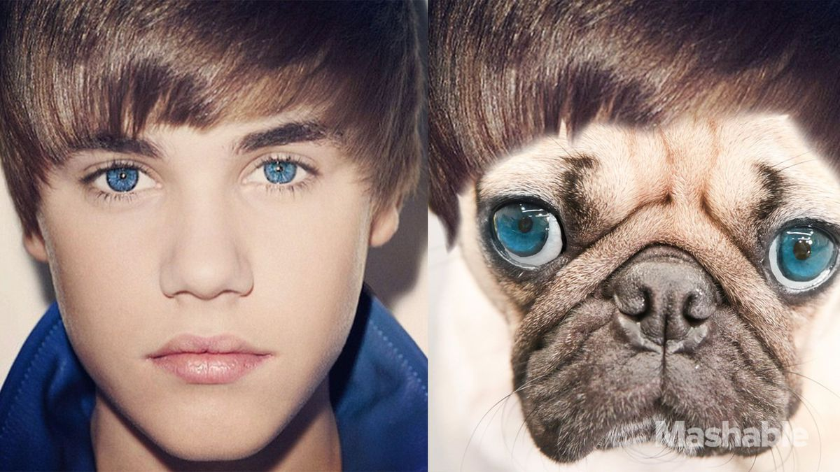 Doug the Pug lives like Justin Bieber for the day