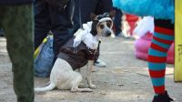 Pooches Showcase Costumes at 2014 Tompkins Square ...