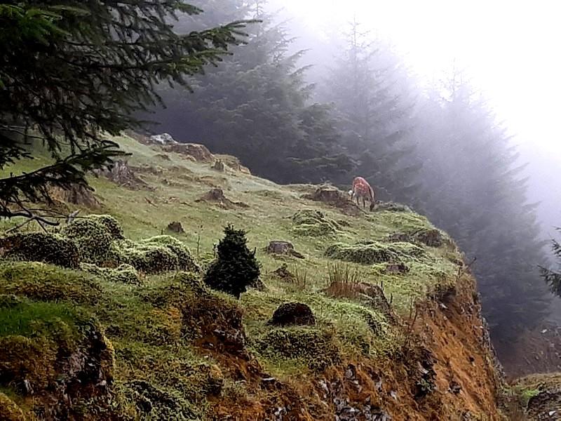biche forêt Glendalough