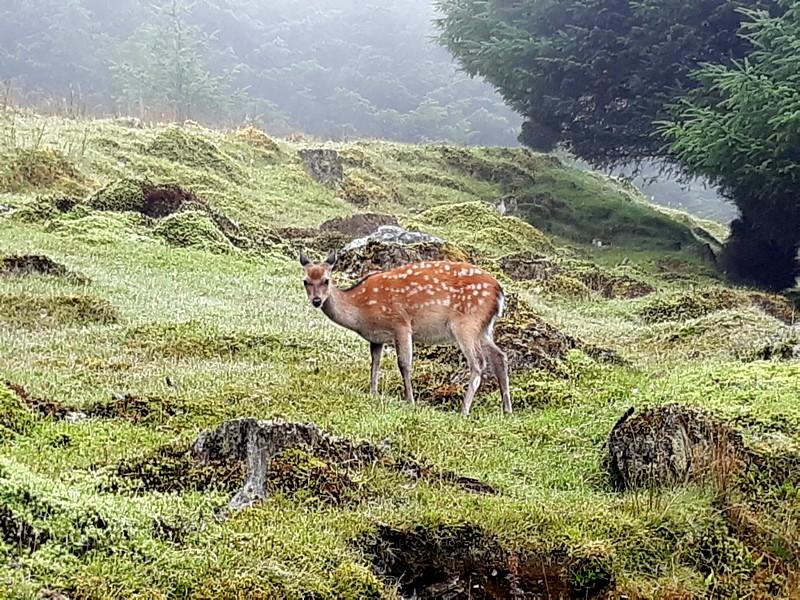 Biche à Glendalough