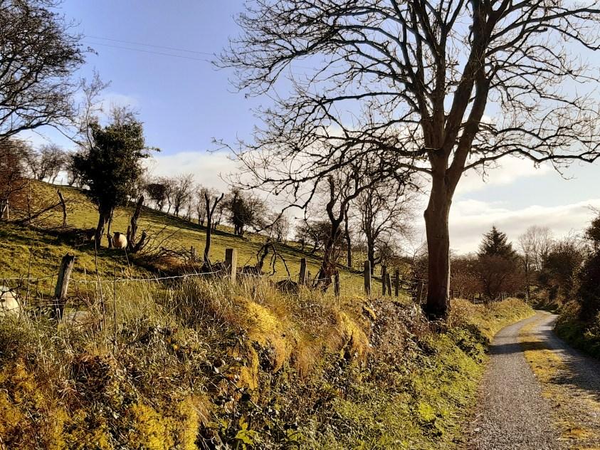 Route de campagne comté Sligo