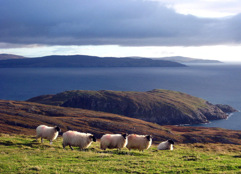 Moutons péninsule West Cork Irlande