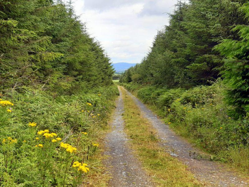 Chemin de randonnée Comté de Waterford