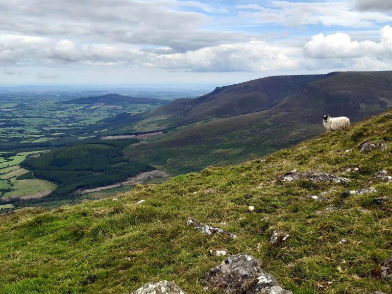 Mouton paysage Randonnée Comeragh Mountains