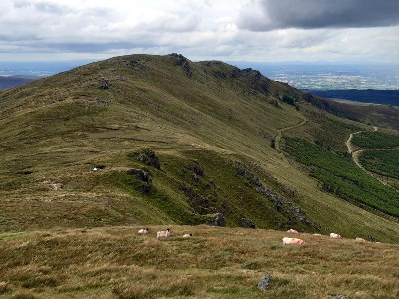 Paysage moutons comeragh Mountains Irlande