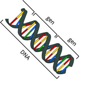 genen en dna