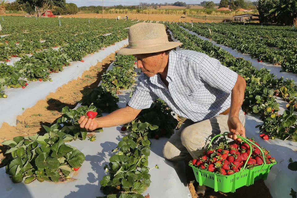 Iniciativa aprovada por exportadores é recebida com preocupação pela agricultura familiarHá desafios que o agricultor brasileiro precisa encarar para garantir a competitividade de seus produtos. - Foto: Agência Brasil