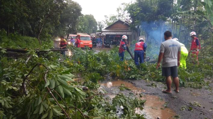 Pancaroba, Awas Pohon Tumbang