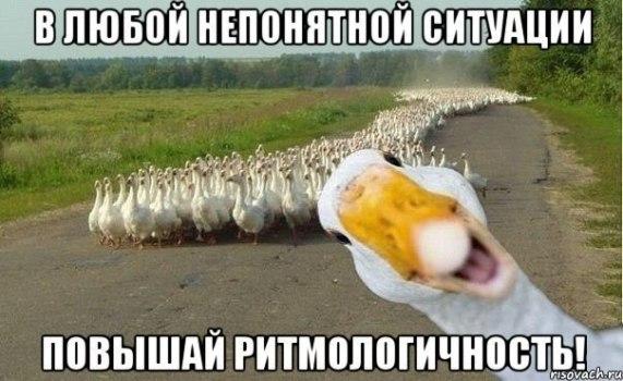 v-lyuboy-neponyatnoy-situatsii-povyishay-ritmologichnost