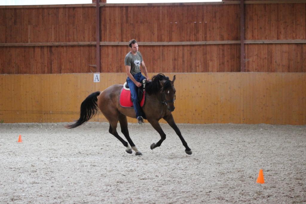 Chtěli jste mít koně nebo boxovací pytel?