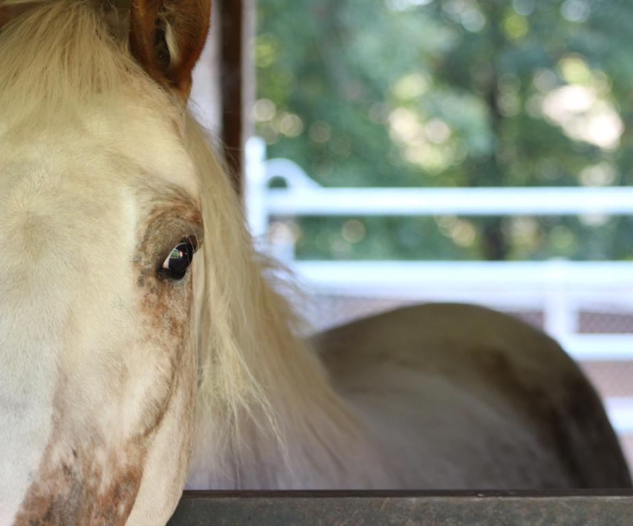Co vám kůň neodpustí