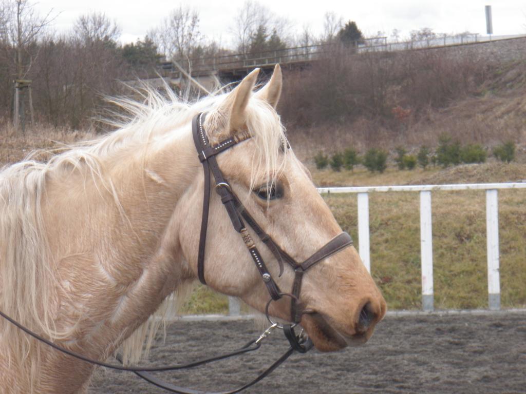Jakého si mám koupit koně? Jaký kůň je pro mne ten pravý?