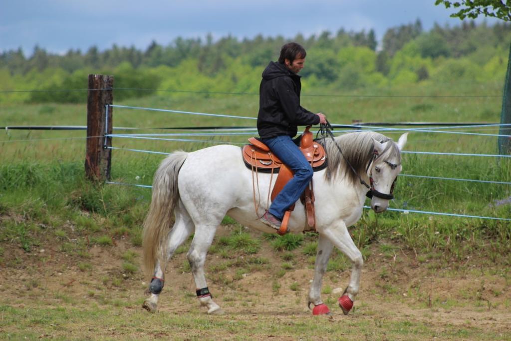 Když budu na koně hodný, tak mi to určitě oplatí