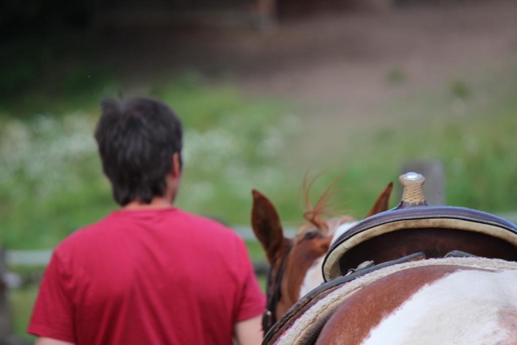Musím se chovat jako kůň aby mi kůň rozumněl?