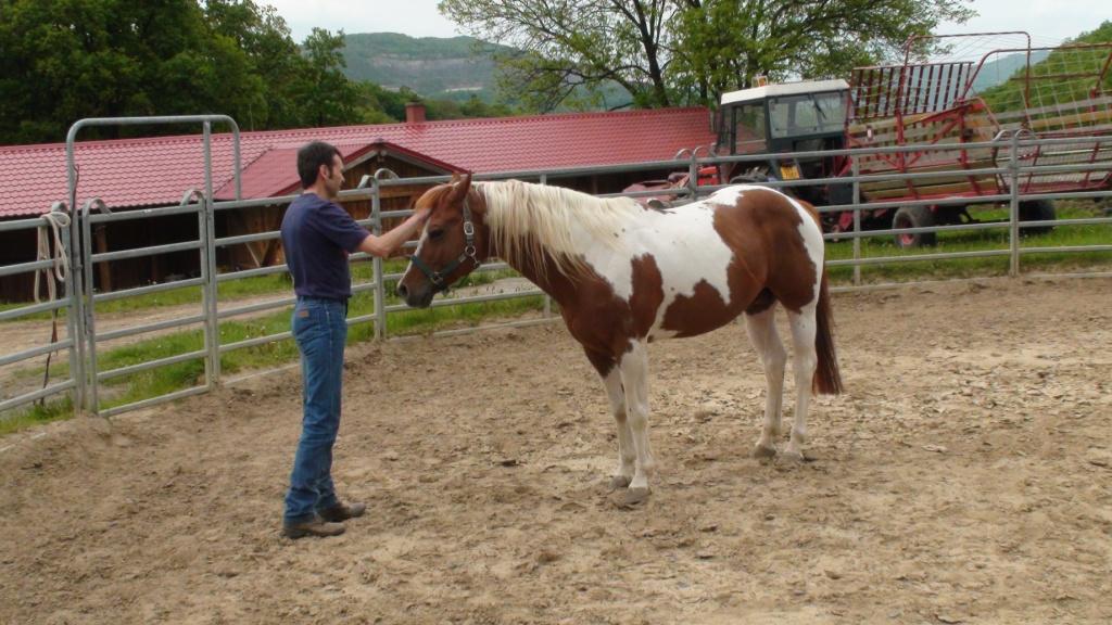 Na čem s koněm nejdříve pracovat