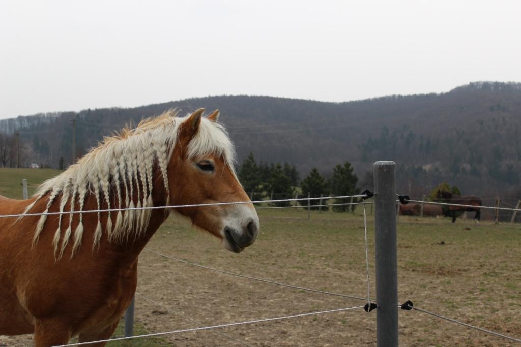 Proč kůň nedělá to, co chci?