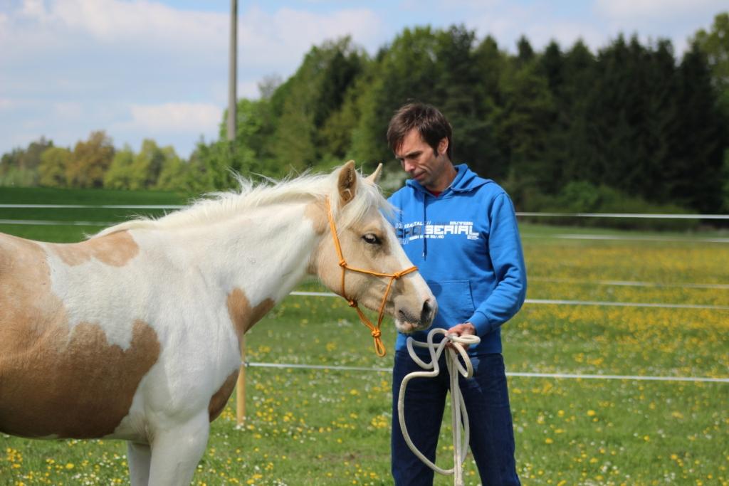 Když dám koni pamlsek, bude mne mít radši (nebo ne)?