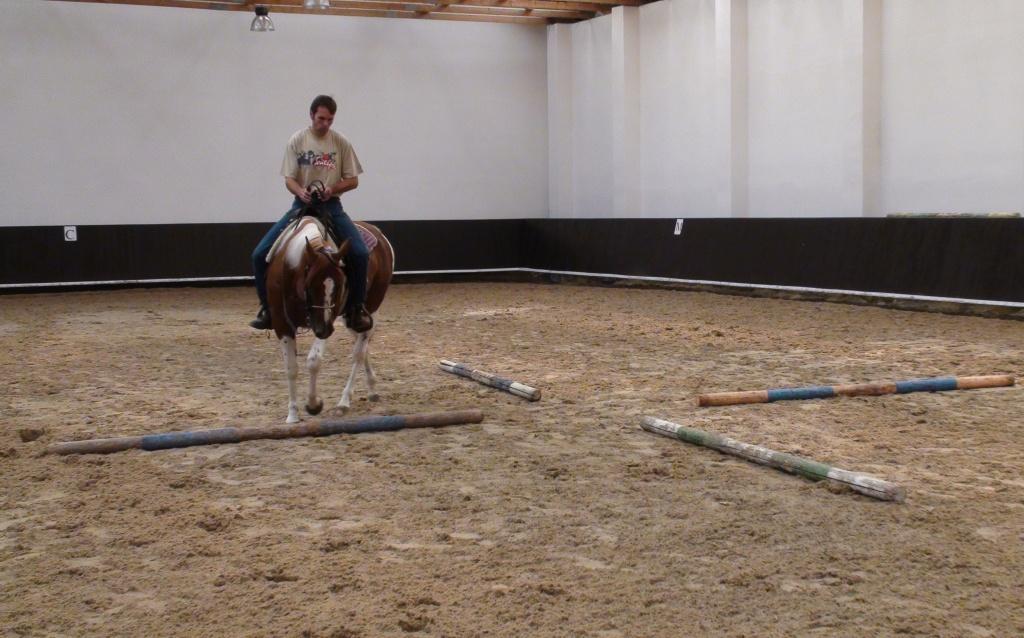 Jak koně rychle něco naučit (nebo odnaučit)