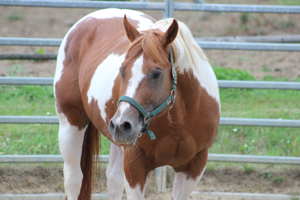 Nikdy neuhodím koně bičem