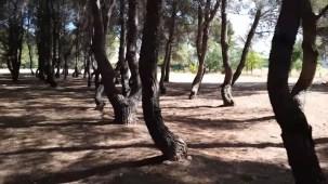arboles torcidos en Albacete por Joan Carles López