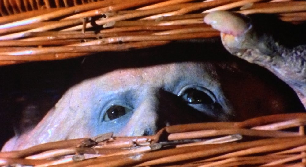 LSFF 2019: Nasty Stuff: BASKET CASE at Regent Street Cinema (18 JAN).