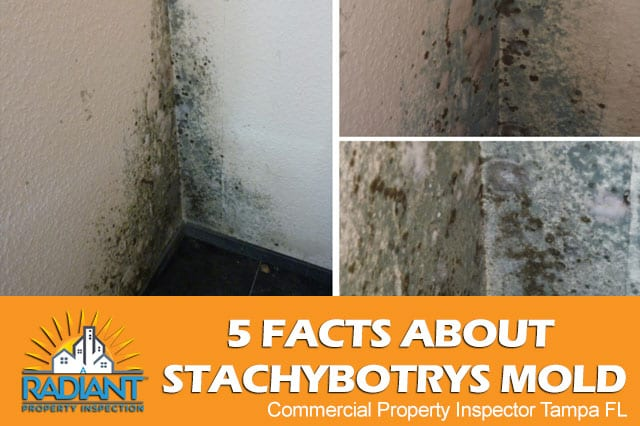 5 Facts About Stachybotrys Mold