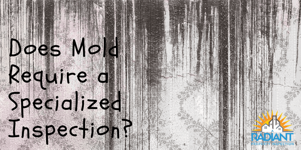 Does Mold Require a Specialized Inspection?