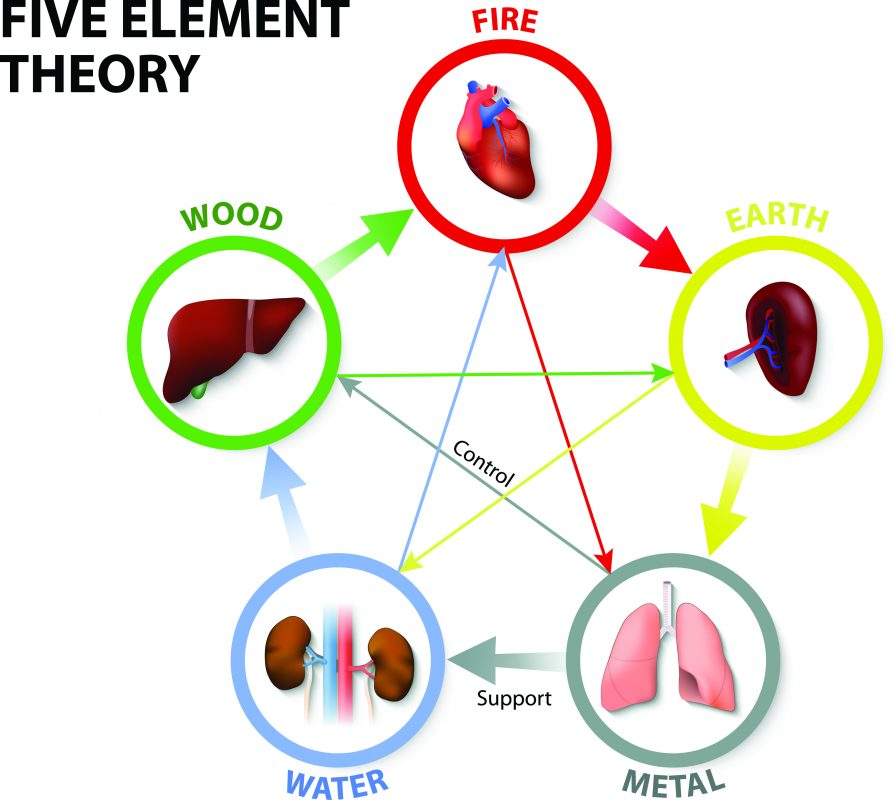 Five element theory Zang organs.