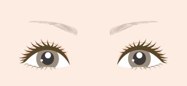 眉頭から眉尻までの長さが短い方