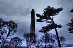 Washington Monument With Pine