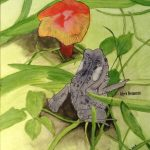 Acrylic and ink painting of a toad beside a mushroom in the grass