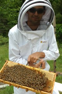 Ron's first time ever with bees.